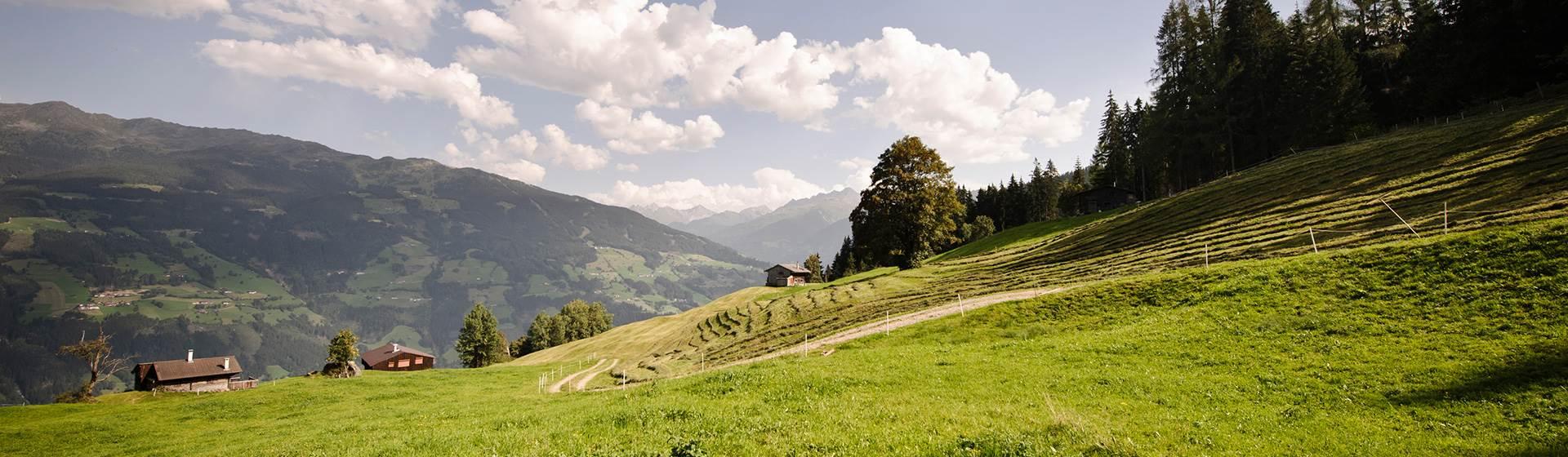 Almlandschaft-im-Zillertal